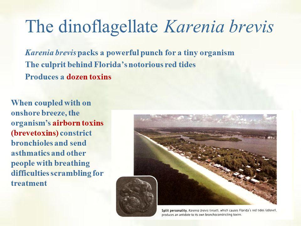 Red Tides: Blooms of dinoflagellates, diatoms 1.