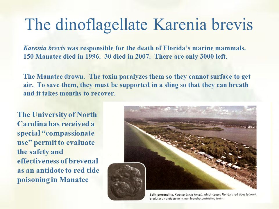 The dinoflagellate Karenia brevis Strangely, the organism also produces a toxin antidote called brevenal, discovered in 2004 at the Center for Marine Sciences at the University of North Carolina.