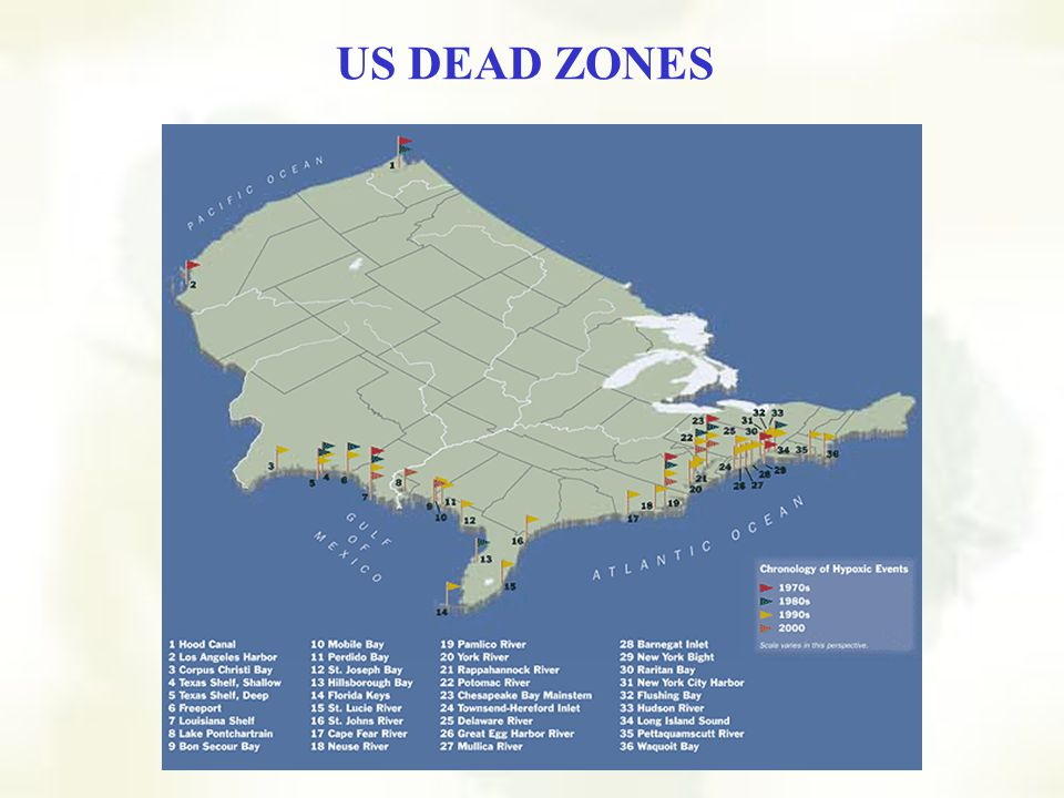 NASA photo of dead zone off Florida Other Algal Blooms NASA photo of dead zone off New Orleans