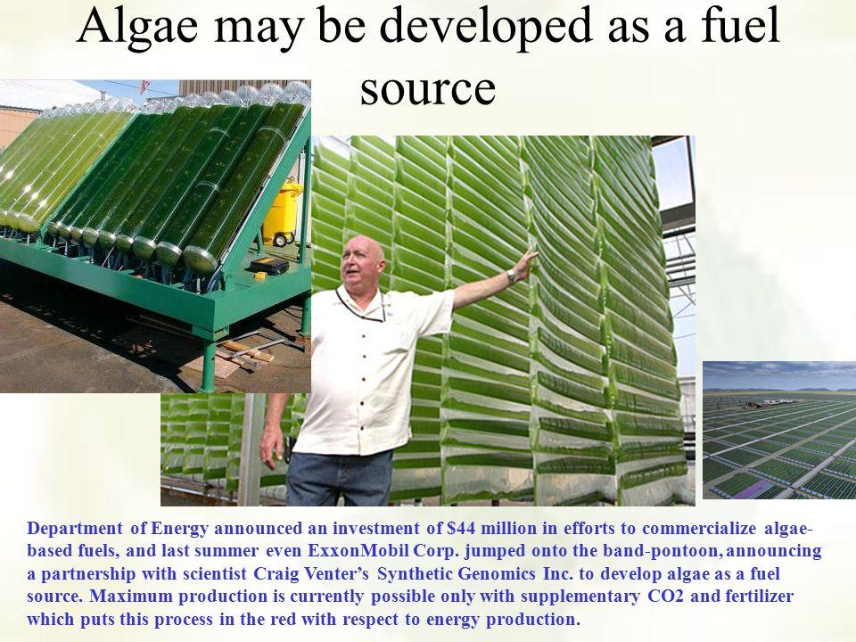 US DEAD ZONES Other Algal Blooms