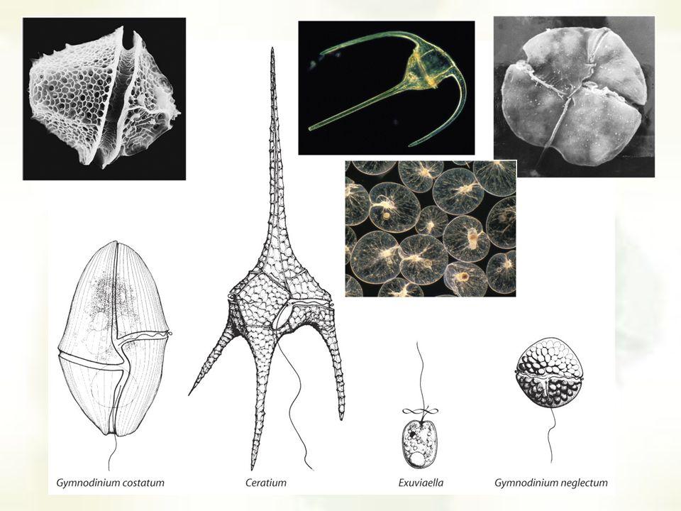 photosynthetic eukaryotes Green algae 1200-1400 Fossil history Diatom fossils Photosynthetic prokaryotes