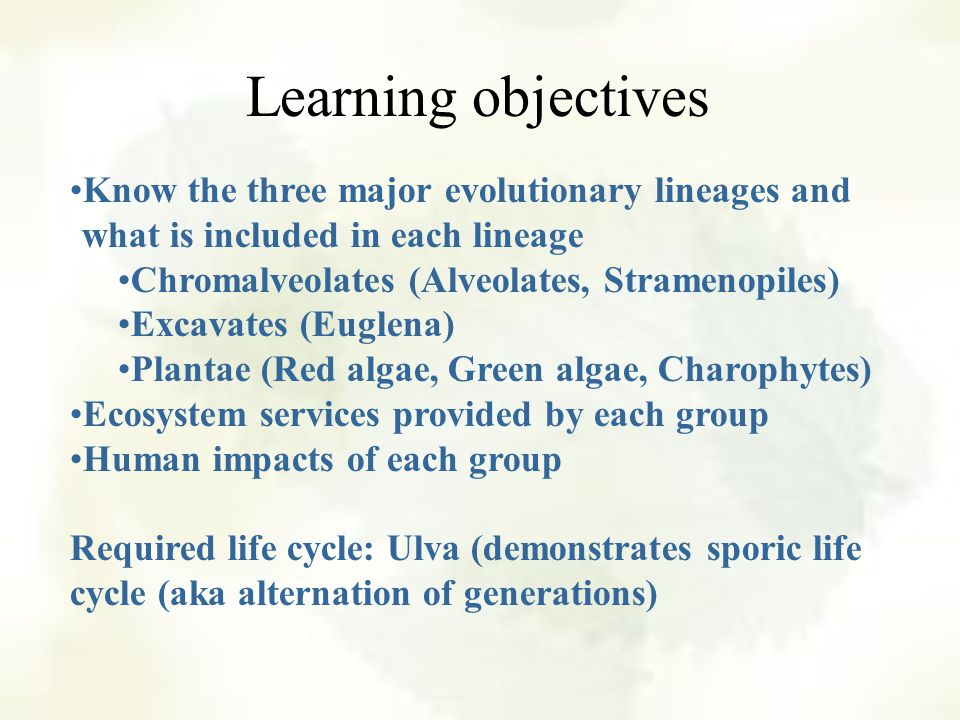 This chapter represents a variety of mostly aquatic autotrophic organisms Protists range from single cells to complex, multicellular organisms a mixture of several evolutionary lineages
