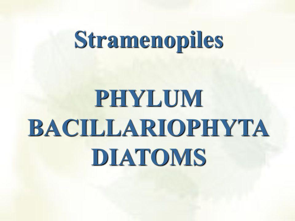 Anterior Posterior Tinsel Flagellum Whiplash Flagellum Many Straminopile gametes have two kinds of flagella (heterokonts): One flagellum has tubular hairs on the flagella (tinsil).