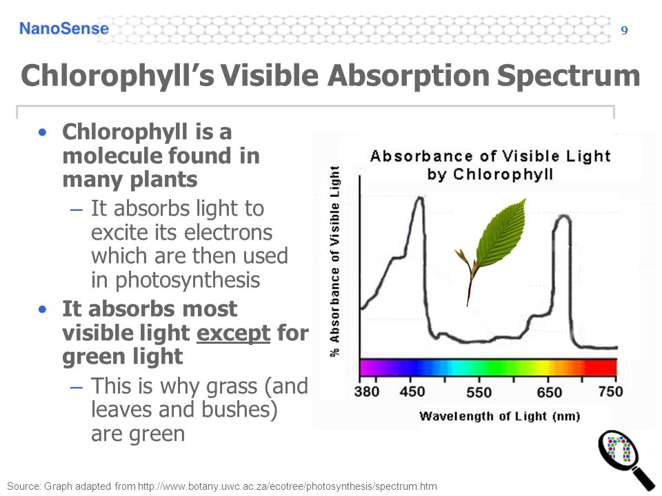 9 Chlorophyll's Visible Absorption Spectrum Source: Graph adapted from http://www.botany.uwc.ac.za/ecotree/photosynthesis/spectrum.htm Chlorophyll is a molecule found in many plants – It absorbs light to excite its electrons which are then used in photosynthesis It absorbs most visible light except for green light – This is why grass (and leaves and bushes) are green