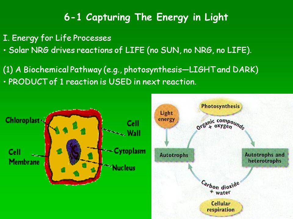 I. Energy for Life Processes (1) A Biochemical Pathway (e.g., photosynthesis—LIGHT and DARK) Solar NRG drives reactions of LIFE (no SUN, no NRG, no LI
