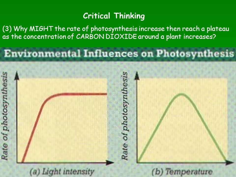 (3) Why MIGHT the rate of photosynthesis increase then reach a plateau as the concentration of CARBON DIOXIDE around a plant increases? Critical Think