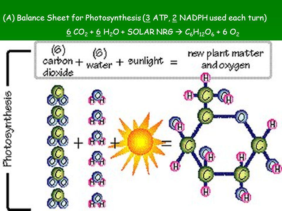 (A) Balance Sheet for Photosynthesis (3 ATP, 2 NADPH used each turn) 6 CO 2 + 6 H 2 O + SOLAR NRG  C 6 H 12 O 6 + 6 O 2