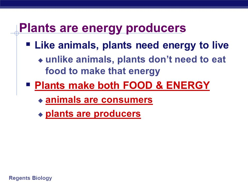 Regents Biology Plants are energy producers  Like animals, plants need energy to live  unlike animals, plants don't need to eat food to make that energy  Plants make both FOOD & ENERGY  animals are consumers  plants are producers
