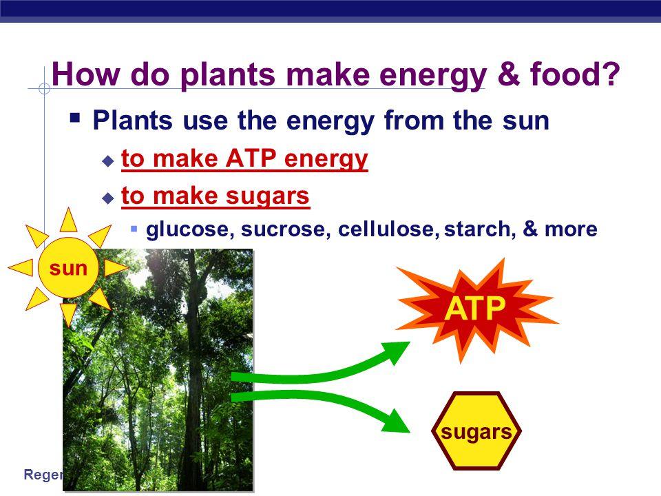 Regents Biology How do plants make energy & food.