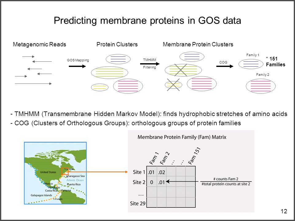 12 Predicting membrane proteins in GOS data - TMHMM (Transmembrane Hidden Markov Model): finds hydrophobic stretches of amino acids - COG (Clusters of Orthologous Groups): orthologous groups of protein families Metagenomic ReadsProtein Clusters GOS Mapping TMHMM Filtering Membrane Protein Clusters COG Family 1 Family 2 * 151 Families