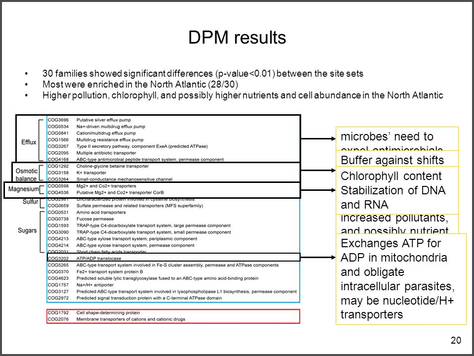 20 DPM results 30 families showed significant differences (p-value<0.01) between the site sets Most were enriched in the North Atlantic (28/30) Higher pollution, chlorophyll, and possibly higher nutrients and cell abundance in the North Atlantic microbes' need to expel antimicrobials, by-products of metabolism, or environmental toxins Buffer against shifts in ocean solute concentrations again alluding to the increased pollutants, and possibly nutrient fluxes from land and rivers Chlorophyll content Stabilization of DNA and RNA Exchanges ATP for ADP in mitochondria and obligate intracellular parasites, may be nucleotide/H+ transporters