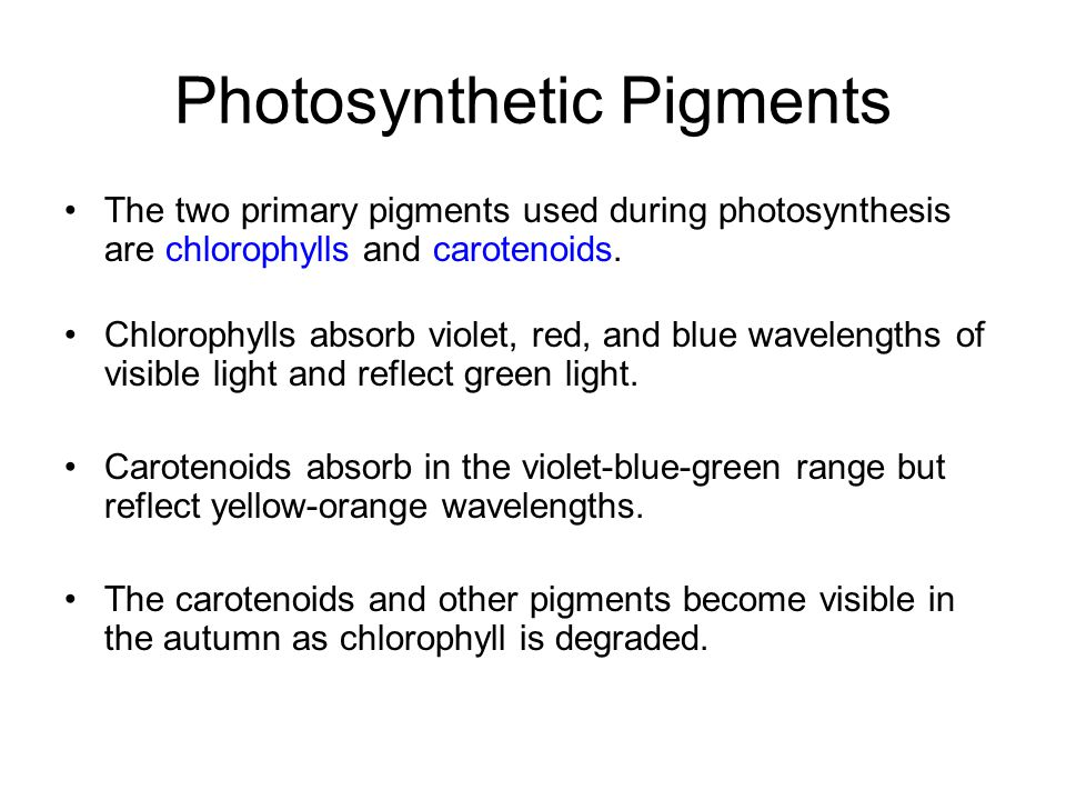 Photosynthetic Pigments The two primary pigments used during photosynthesis are chlorophylls and carotenoids. Chlorophylls absorb violet, red, and blu
