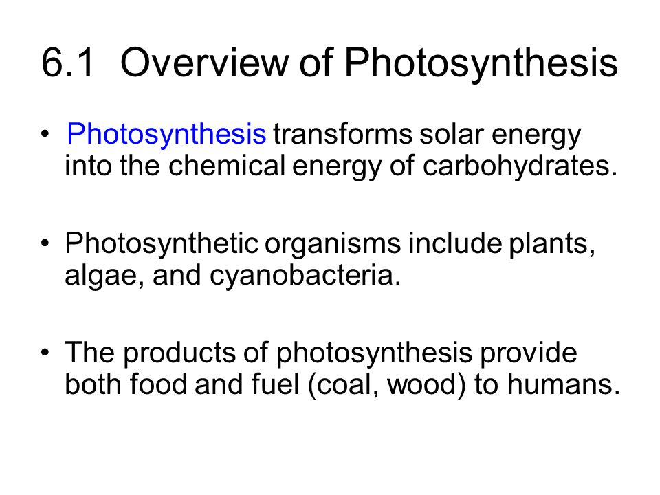 Overview of Photosynthesis (cont.)