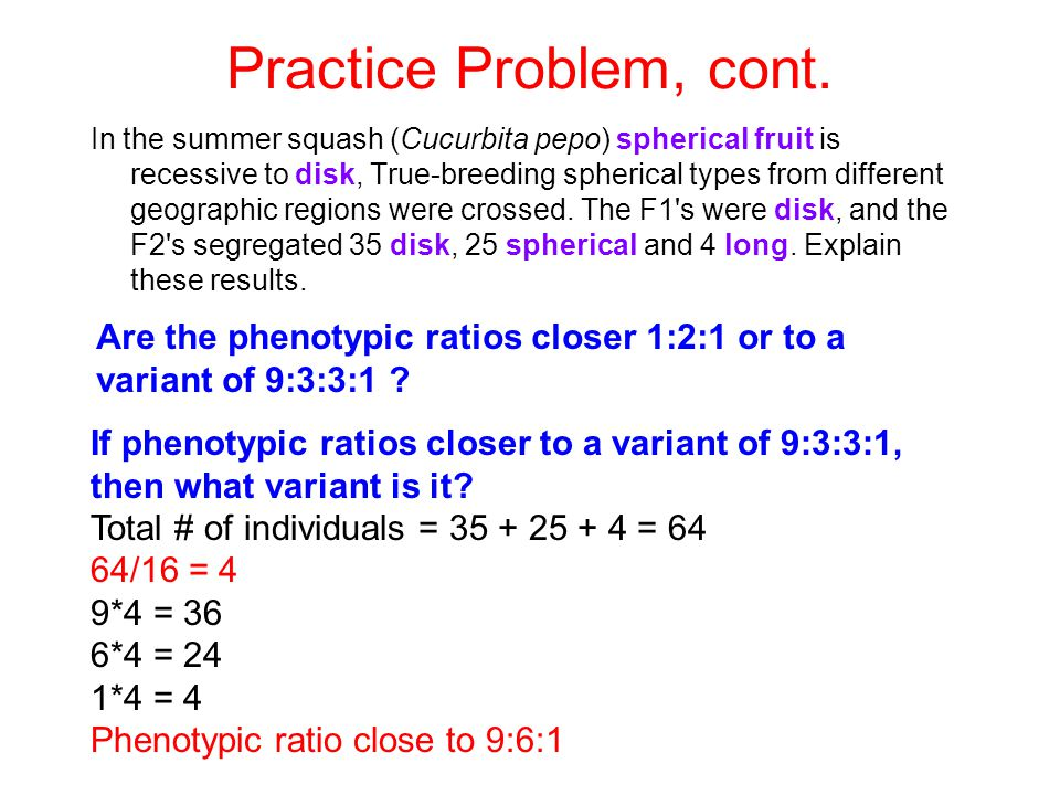 Practice Problem, cont. In the summer squash (Cucurbita pepo) spherical fruit is recessive to disk, True-breeding spherical types from different geogr