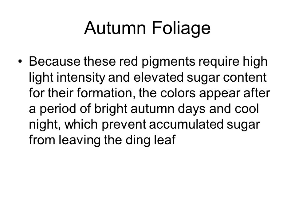 Autumn Foliage Because these red pigments require high light intensity and elevated sugar content for their formation, the colors appear after a period of bright autumn days and cool night, which prevent accumulated sugar from leaving the ding leaf