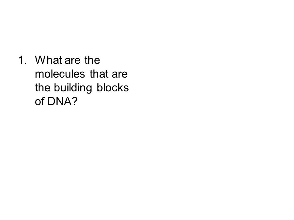 1.What are the molecules that are the building blocks of DNA?