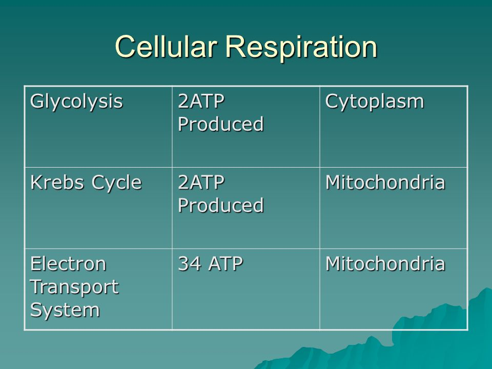 Cellular Respiration Glycolysis 2ATP Produced Cytoplasm Krebs Cycle 2ATP Produced Mitochondria Electron Transport System 34 ATP Mitochondria