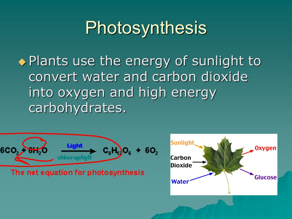 Photosynthesis  Plants use the energy of sunlight to convert water and carbon dioxide into oxygen and high energy carbohydrates.