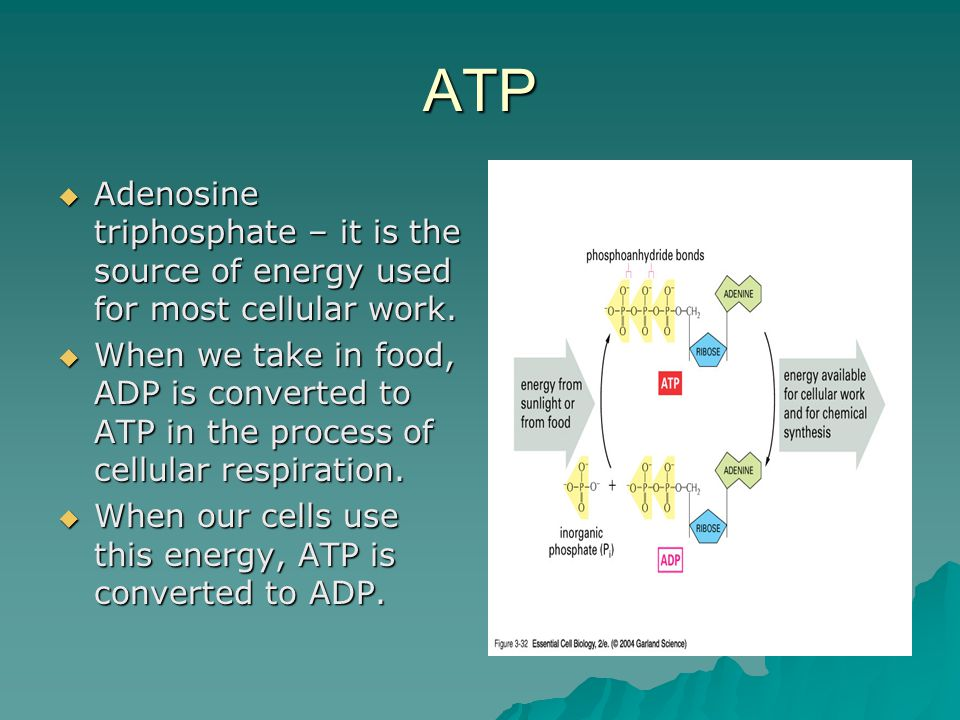 ATP  Adenosine triphosphate – it is the source of energy used for most cellular work.