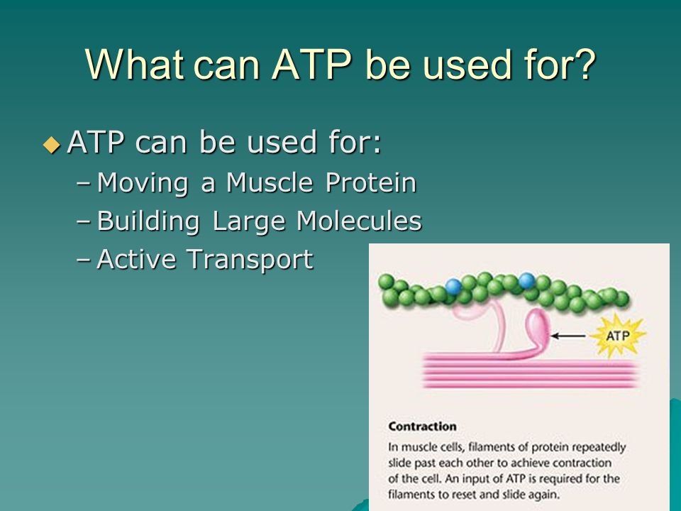What can ATP be used for.