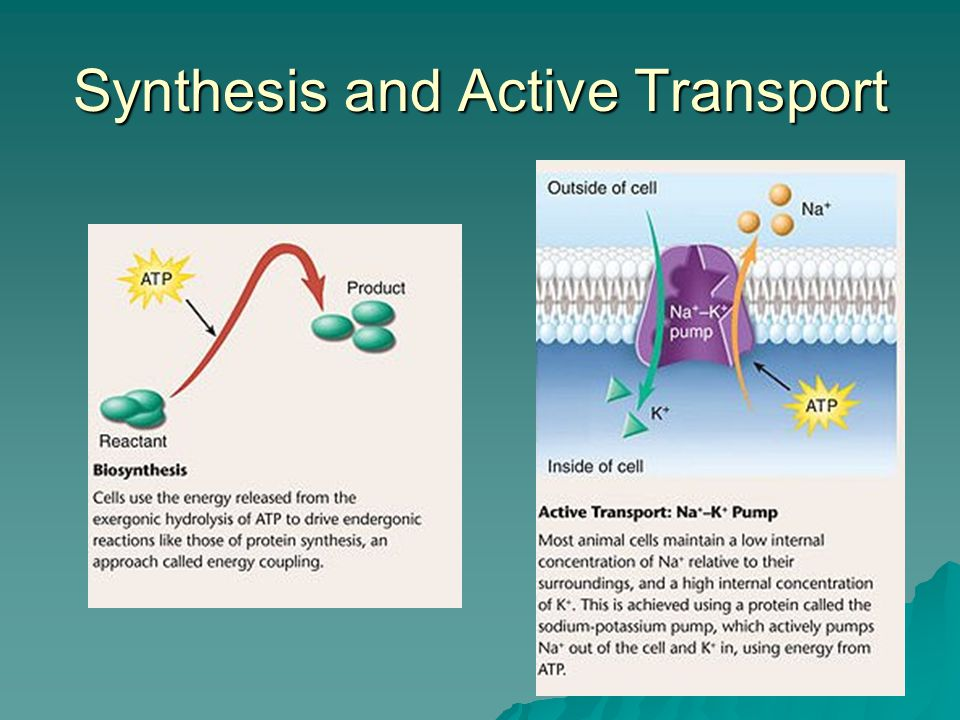 Synthesis and Active Transport