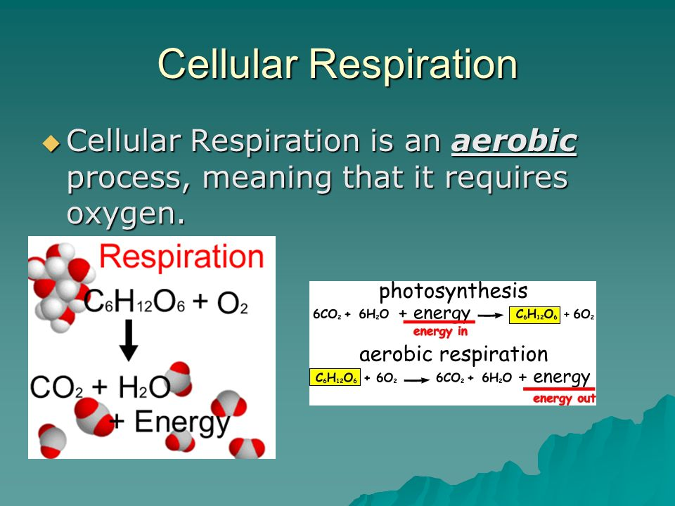 Cellular Respiration  Cellular Respiration is an aerobic process, meaning that it requires oxygen.
