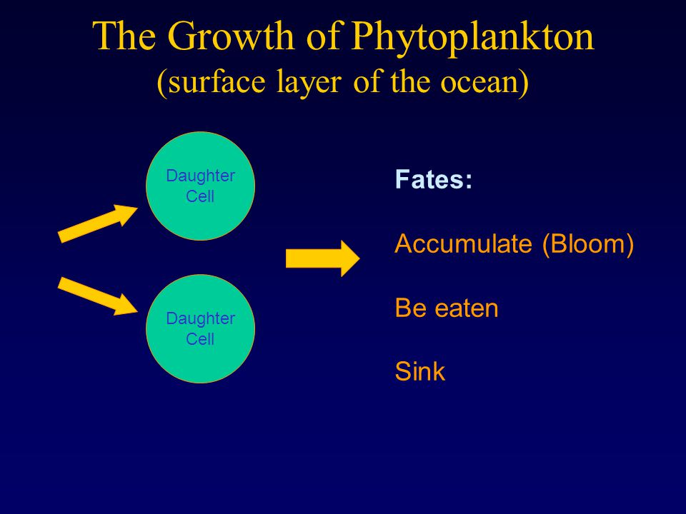 The Growth of Phytoplankton (surface layer of the ocean) Daughter Cell Daughter Cell Fates: Accumulate (Bloom) Be eaten Sink