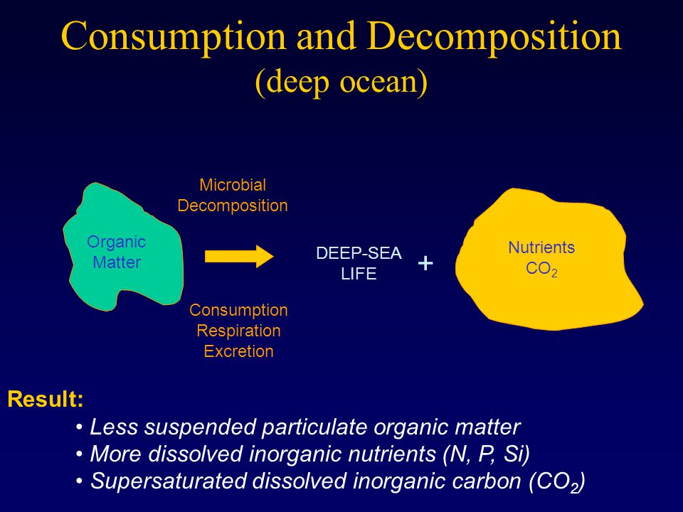 Consumption and Decomposition (deep ocean) Microbial Decomposition Consumption Respiration Excretion Result: Less suspended particulate organic matter