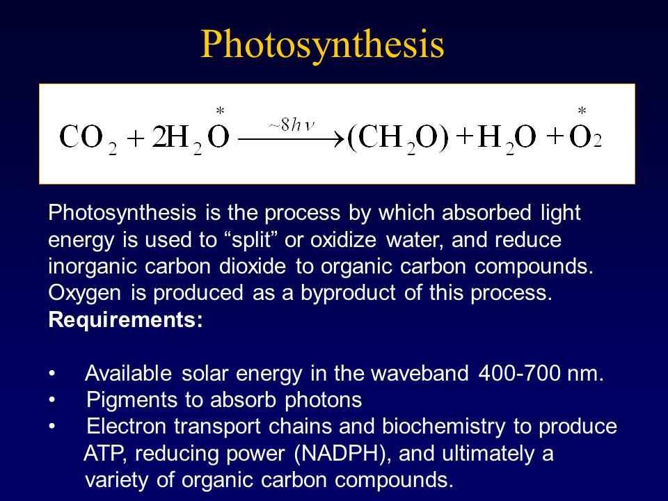 "Photosynthesis Photosynthesis is the process by which absorbed light energy is used to ""split"" or oxidize water, and reduce inorganic carbon dioxide t"