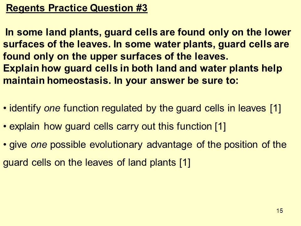 15 Regents Practice Question #3 In some land plants, guard cells are found only on the lower surfaces of the leaves.