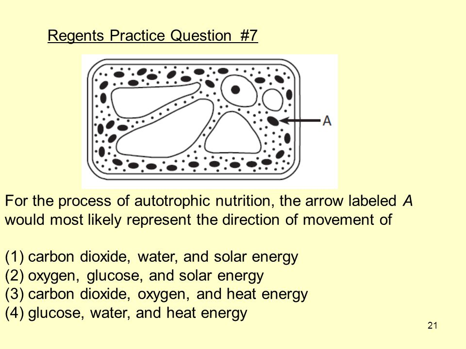 21 Regents Practice Question #7 For the process of autotrophic nutrition, the arrow labeled A would most likely represent the direction of movement of (1) carbon dioxide, water, and solar energy (2) oxygen, glucose, and solar energy (3) carbon dioxide, oxygen, and heat energy (4) glucose, water, and heat energy