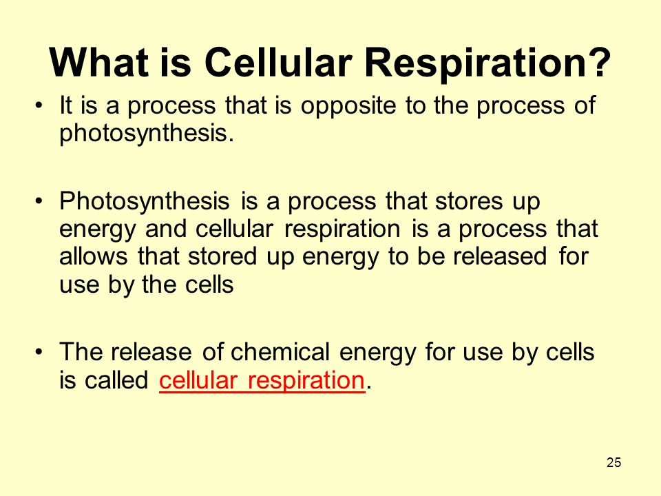 25 What is Cellular Respiration.It is a process that is opposite to the process of photosynthesis.