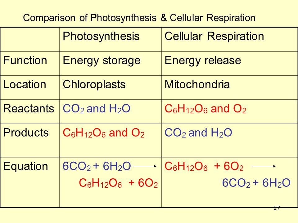 27 Comparison of Photosynthesis & Cellular Respiration PhotosynthesisCellular Respiration FunctionEnergy storageEnergy release LocationChloroplastsMitochondria ReactantsCO 2 and H 2 OC 6 H 12 O 6 and O 2 ProductsC 6 H 12 O 6 and O 2 CO 2 and H 2 O Equation6CO 2 + 6H 2 O C 6 H 12 O 6 + 6O 2 6CO 2 + 6H 2 O