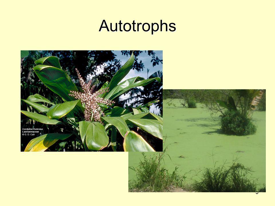 3 Autotrophs