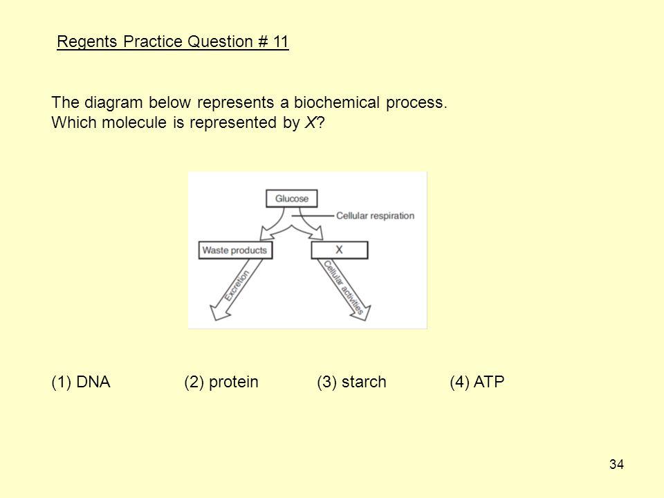 34 The diagram below represents a biochemical process.