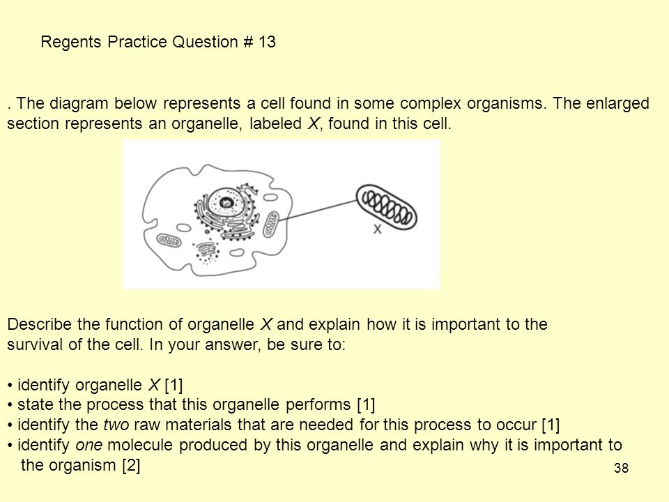 38.The diagram below represents a cell found in some complex organisms.