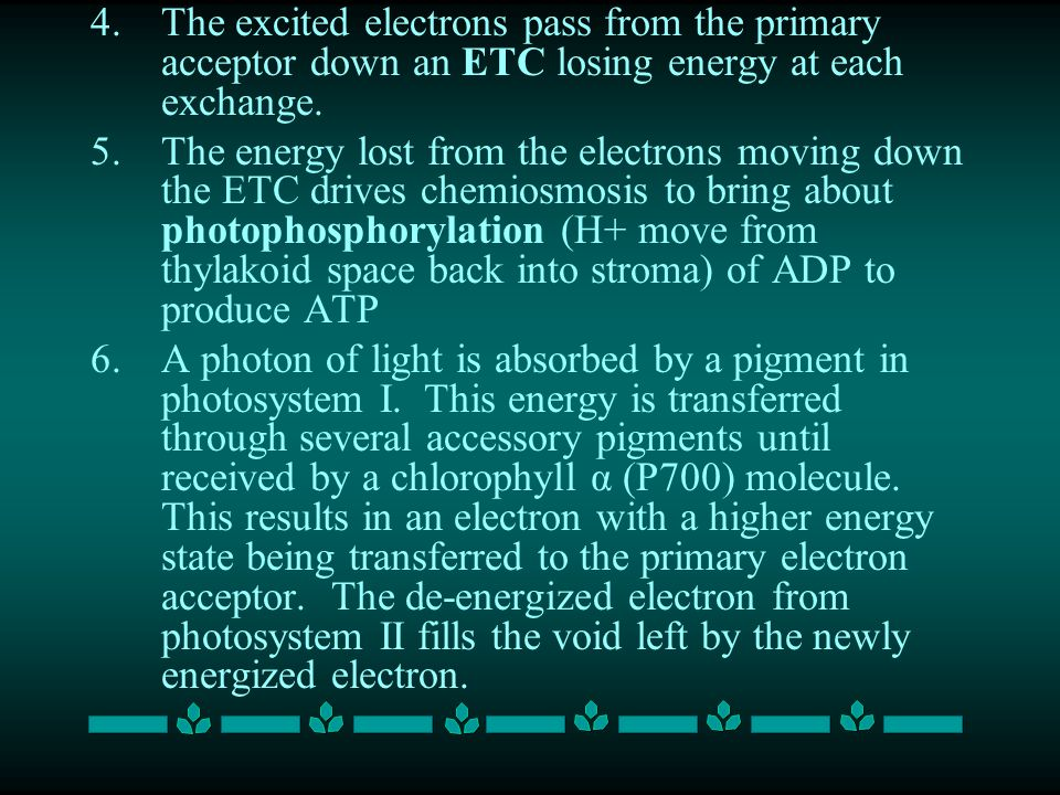 4.The excited electrons pass from the primary acceptor down an ETC losing energy at each exchange.
