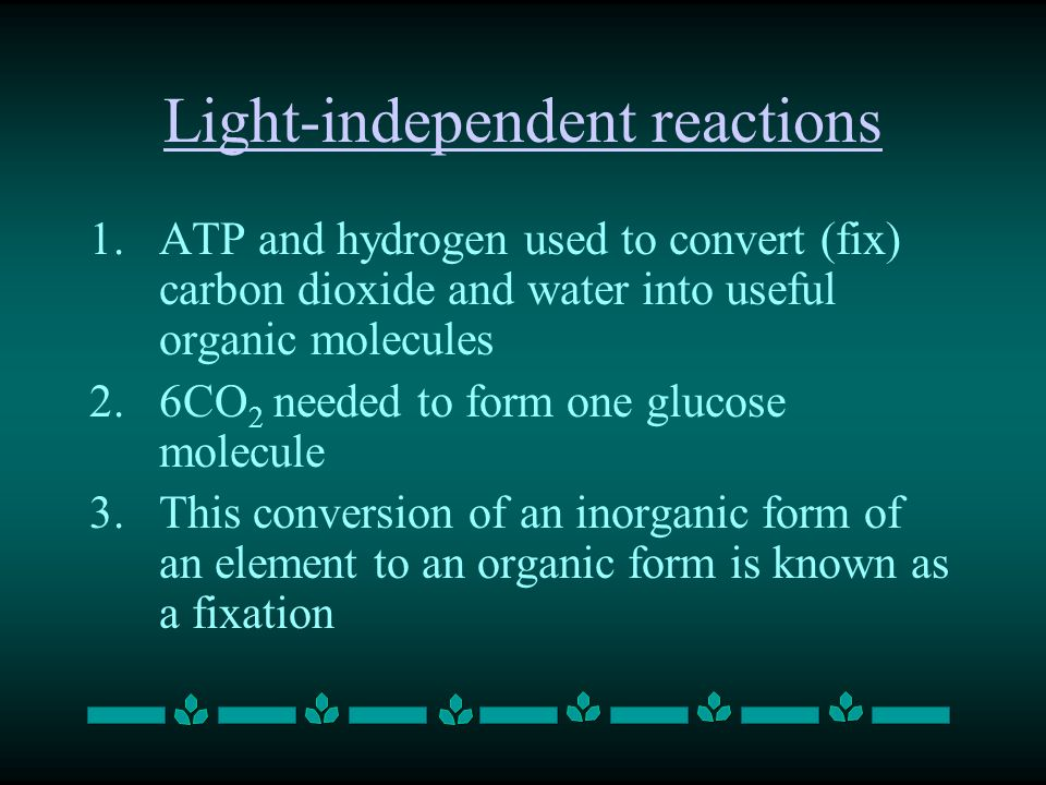 Light-independent reactions 1.ATP and hydrogen used to convert (fix) carbon dioxide and water into useful organic molecules 2.6CO 2 needed to form one glucose molecule 3.This conversion of an inorganic form of an element to an organic form is known as a fixation