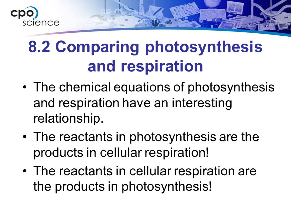 8.2 Comparing photosynthesis and respiration The chemical equations of photosynthesis and respiration have an interesting relationship.