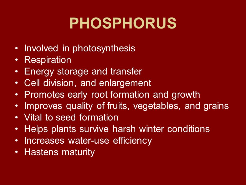 POTASSIUM Carbohydrate metabolism and the break down and translocation of starches Increases photosynthesis Increases water-use efficiency Essential to protein synthesis Important in fruit formation Activates enzymes and controls their reaction rates Improves quality of seeds and fruit Improves winter hardiness Increases disease resistance