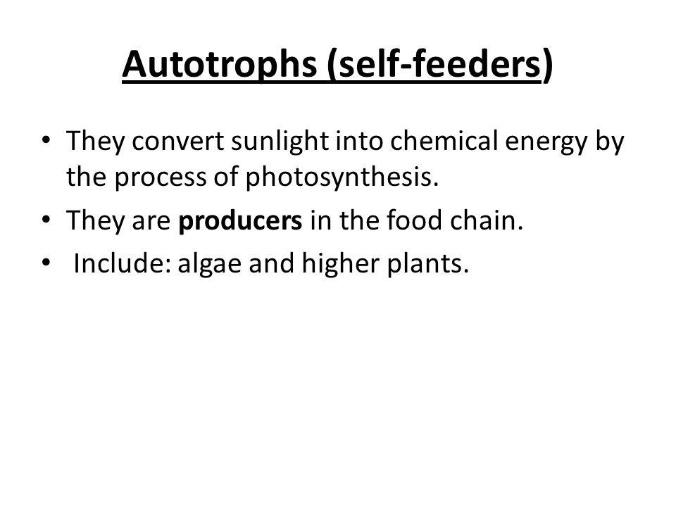 Summary of Photosynthesis Light-dependent Light-independent
