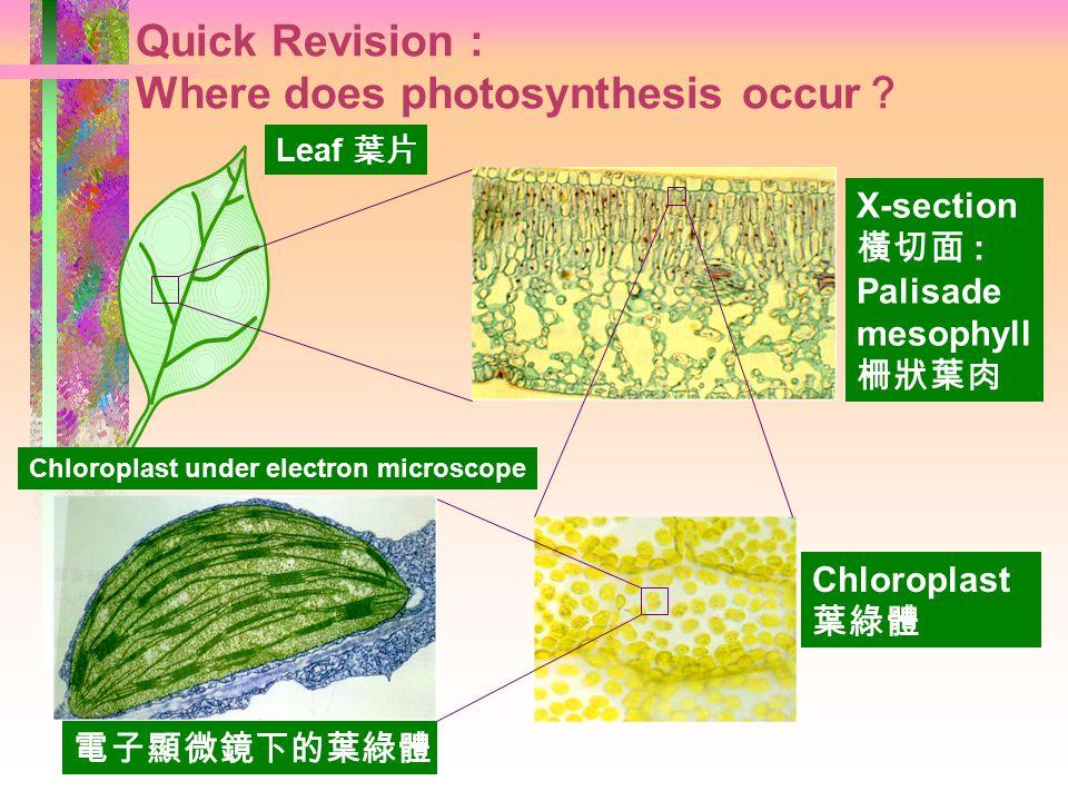 2015/4/30 Photosynthesis 光合作用 香港道教聯合會青松中學 吳友強
