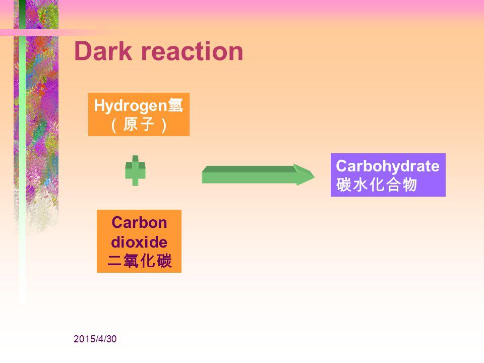 2015/4/30 Water 水 Light 陽光 Chlorophyll 葉綠素 Oxygen 氧 Hydrogen 氫 (原子) Released from the plant Dark reaction Light reaction