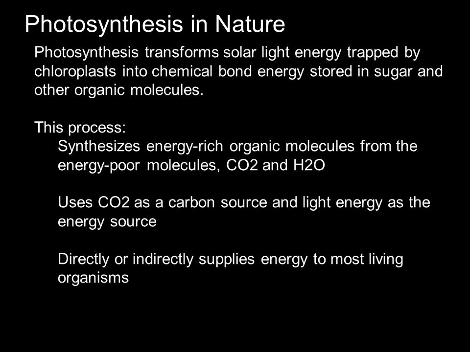 Photosynthesis in Nature Photosynthesis transforms solar light energy trapped by chloroplasts into chemical bond energy stored in sugar and other orga