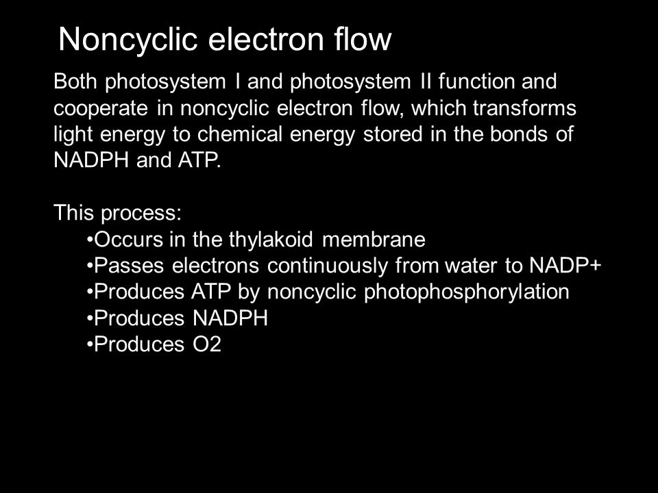 Noncyclic electron flow Both photosystem I and photosystem II function and cooperate in noncyclic electron flow, which transforms light energy to chem