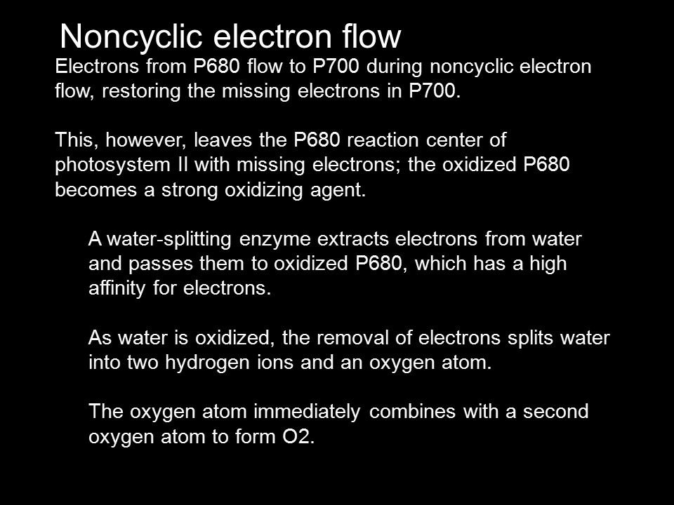 Noncyclic electron flow Electrons from P680 flow to P700 during noncyclic electron flow, restoring the missing electrons in P700. This, however, leave