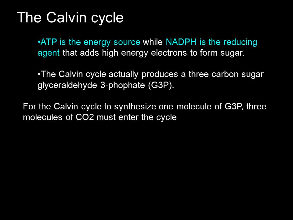 The Calvin cycle ATP is the energy source while NADPH is the reducing agent that adds high energy electrons to form sugar. The Calvin cycle actually p