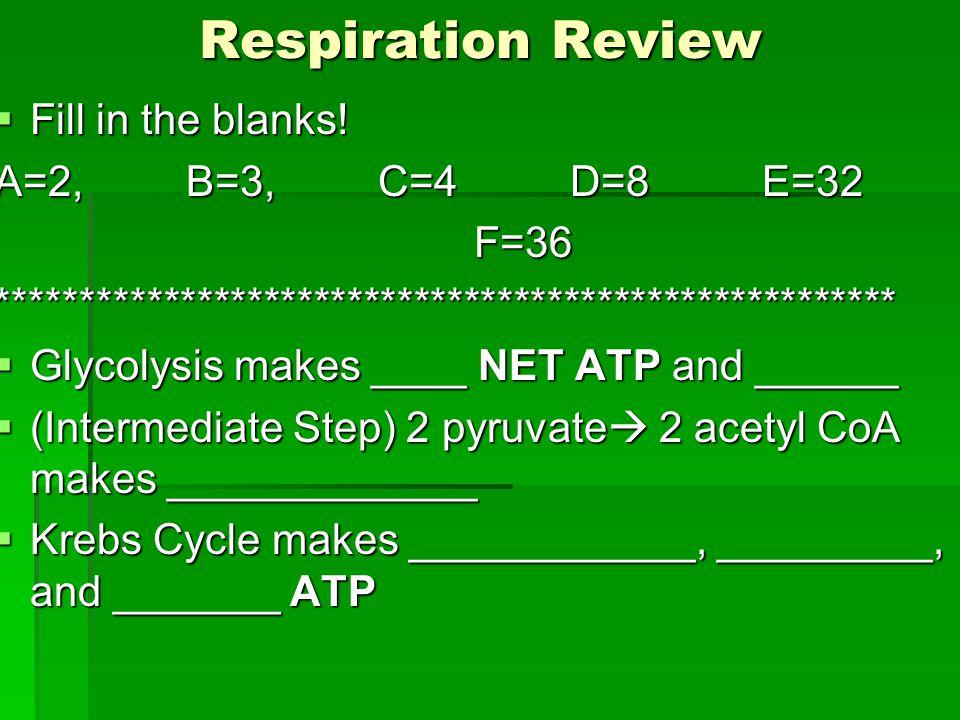 Photosynthesis 6CO2 + 6 H20  C6H12O6 + 6O2