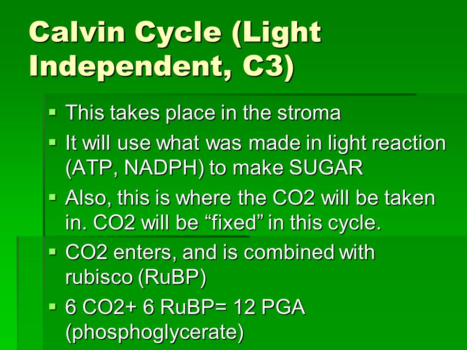 Calvin Cycle (Light Independent, C3)  This takes place in the stroma  It will use what was made in light reaction (ATP, NADPH) to make SUGAR  Also, this is where the CO2 will be taken in.
