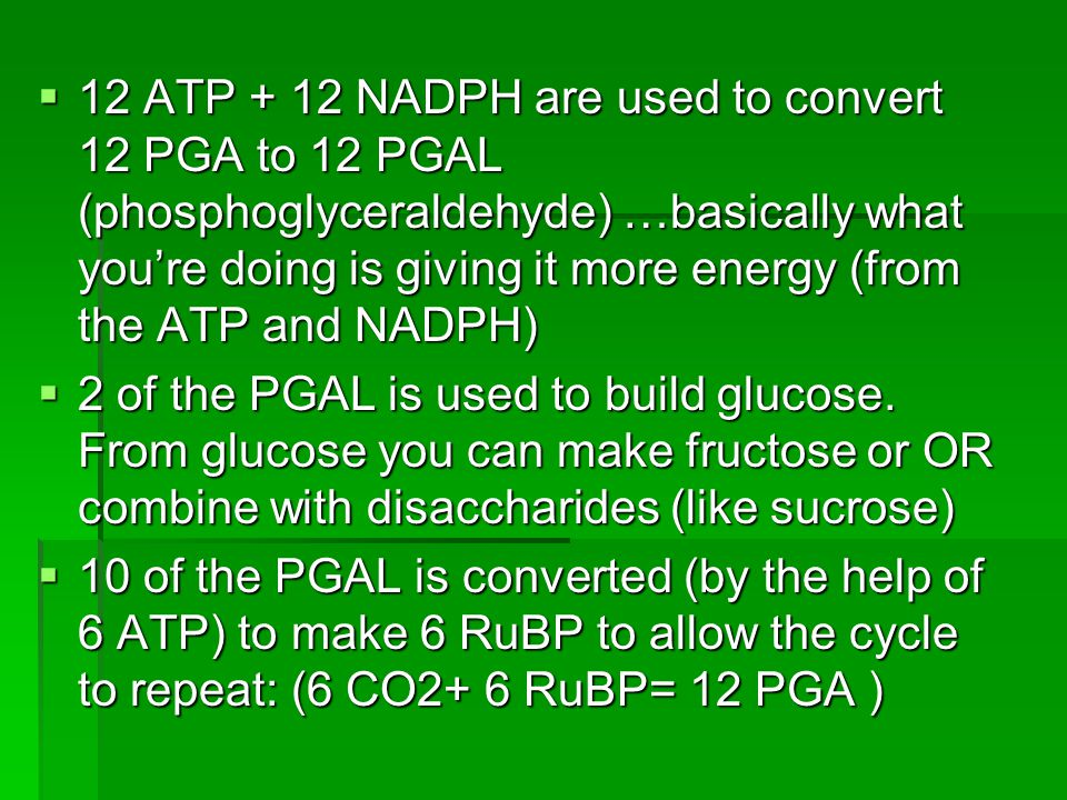  12 ATP + 12 NADPH are used to convert 12 PGA to 12 PGAL (phosphoglyceraldehyde) …basically what you're doing is giving it more energy (from the ATP and NADPH)  2 of the PGAL is used to build glucose.